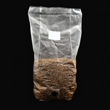 2 x Pre Sterilized Rye Grain/ Wheat grain Bags with injection ports GREAT FOR MAKING BULK SUBSTRATE - FREE SHIPPING
